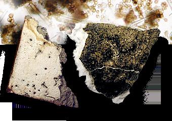 Ceiling Tile Fragments